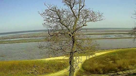 Keitum Webcam mit Blick auf's Wattenmeer