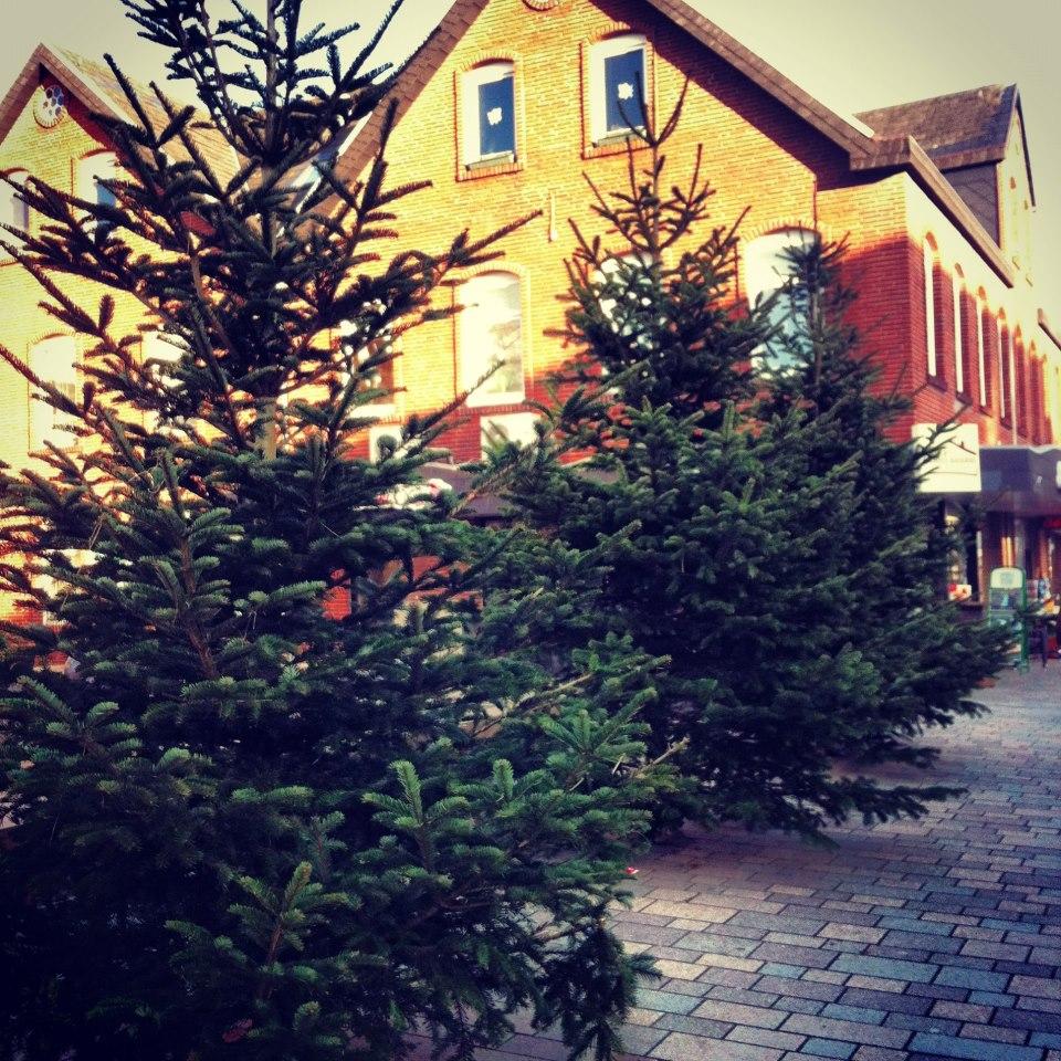 Gemeinde Sylt holt Weihnachtsbäume ab