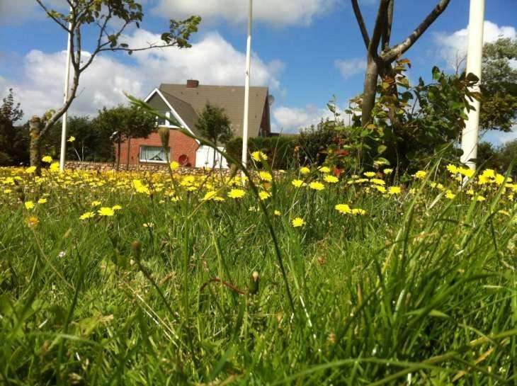 Eine schöne Blumenwiese kann für Allergiker auch schon mal Ungemach bedeuten