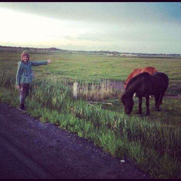 Sylter Pferde mögen Mish Mash