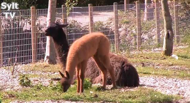Sylter Tierpark in Tinnum - Öffnungszeiten, Preise und Tipps